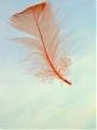 Pyłek na wietrze